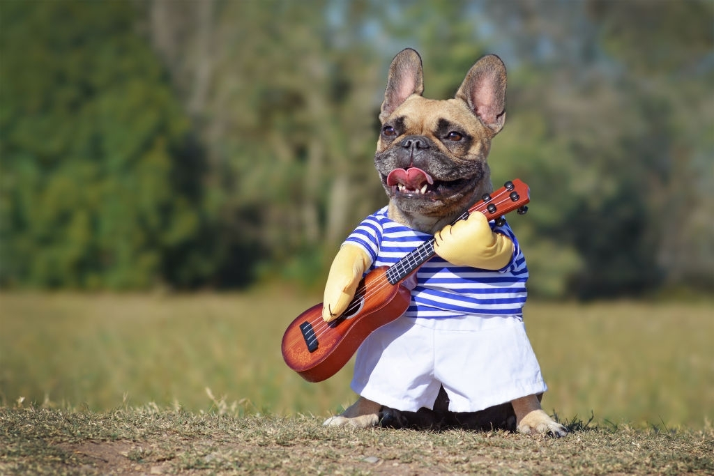 french bulldog clothes for dogs