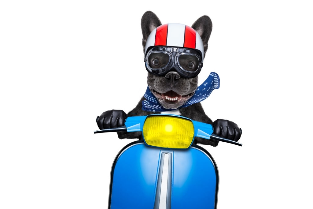 french bulldog outfits